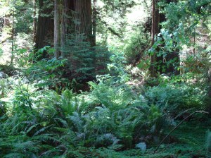 the ferns that surround the trees