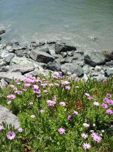 flowers on the hillside above a beach